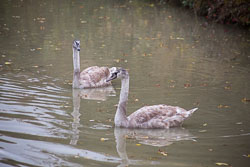 Oxford_Canal-019.jpg