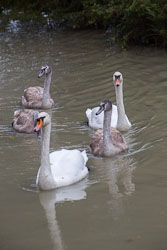 Oxford_Canal-045.jpg