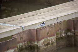 Oxford_Canal_Banks-009.jpg