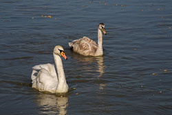 Oxford_Canal_South-080.jpg