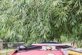 2017July_Oxford_Canal-059