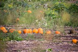 GUC_Pumpkins-002.jpg