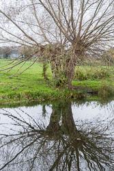 River_Avon-033.jpg