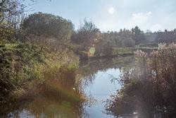 River_Avon-093.jpg