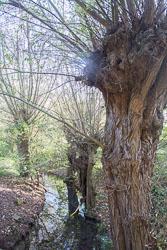 River_Avon_Stratford-Upon-Avon-013.jpg