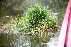 Birmingham_-_Fazeley_Canal-1513.jpg
