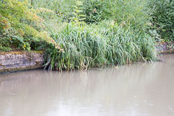 Oxford_Canal_North-1458.jpg