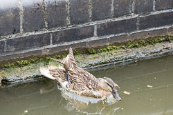 Coventry_Canal-283.jpg