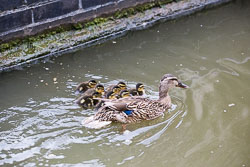 Coventry_Canal-284.jpg