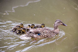 Coventry_Canal-285.jpg
