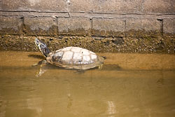 Coventry_Canal-362.jpg