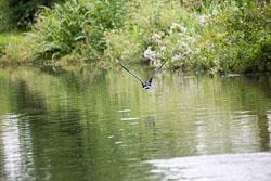 Trent_-_Mersey_Canal-191.jpg