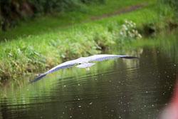 Trent_-_Mersey_Canal-200.jpg