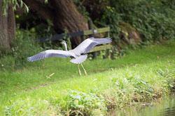 Trent_-_Mersey_Canal-201.jpg