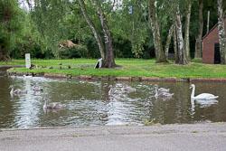 Trent_-_Mersey_Canal-303.jpg
