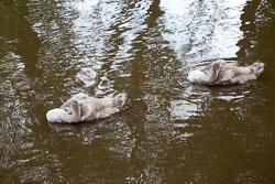 Trent_-_Mersey_Canal-304.jpg