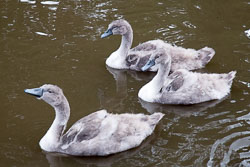 Trent_-_Mersey_Canal-308.jpg