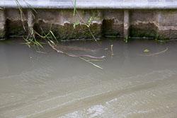 Ashby_De_La_Zouch_Canal-171.jpg