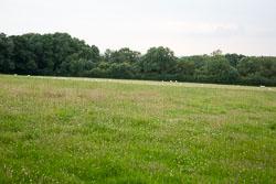 Bosworth_Field-015.jpg