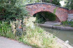 Oxford_Canal_North-1453.jpg
