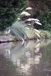 Grand_Union_Canal-3061.jpg