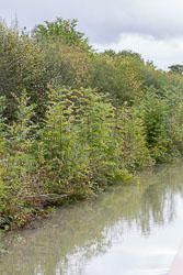 Oxford_Canal_South-3093.jpg