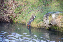 Grand_Union_Canal-924.jpg