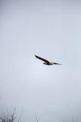 Kite-001.jpg