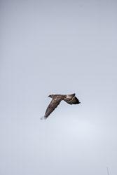 Kite-002.jpg