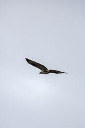 Kite-003.jpg