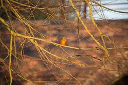 Leicester_Line_Market_Harborough_Branch_Kingfisher-011.jpg
