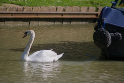 Oxford_Canal_South-028.jpg