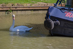 Oxford_Canal_South-029.jpg