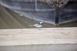 Oxford_Canal_South-577.jpg