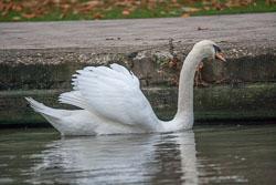 SUAC_Bancroft_Basin_Stratford-Upon-Avon-024.jpg