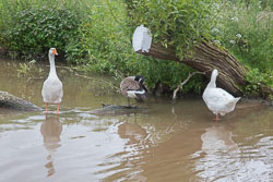 Shropshire_Union_Canal-521.jpg