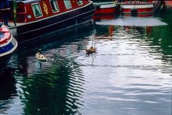 Huddersfield_Canal_443.jpg