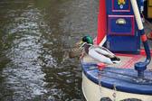 Llangollen,_Llangollen_Canal-118