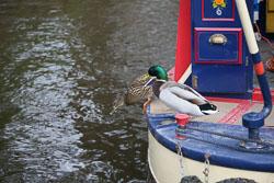 Llangollen,_Llangollen_Canal-118.jpg