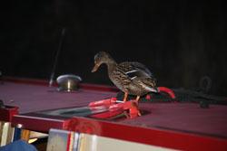 Llangollen,_Llangollen_Canal-128.jpg