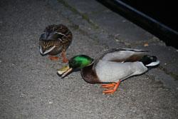 Llangollen,_Llangollen_Canal-136.jpg