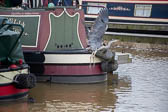 Heron_Aqueduct_Marina_Middlewich_Branch_Shropshire_Union_Canal-001