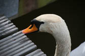 Swan_Aqueduct_Marina_Middlewich_Branch_Shropshire_Union_Canal-003
