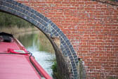 Oxford_Canal_South-488