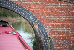 Oxford_Canal_South-488.jpg