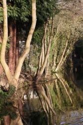 Llangollen_Canal-142.jpg