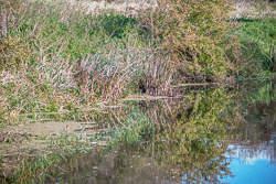River_Avon-003.jpg