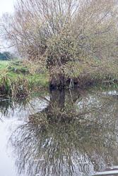 River_Avon-030.jpg
