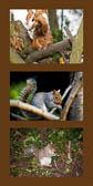 Squirrels_-001