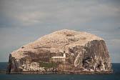 Bass Rock, Lothian -004